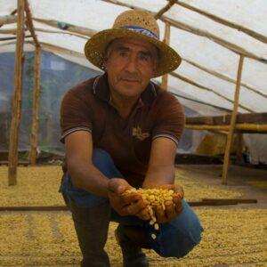 Bauer mit gelben Bio-Kaffeebohnen in den Händen im Gewächshaus. Dahinter Kaffenbohnen beim trocknen.