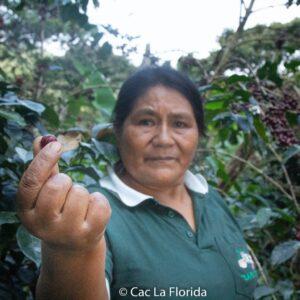 Bäuering hält eine Kaffkirsche im Pinzettengriff. Dahinter sind Kaffepflanzen zu sehen.